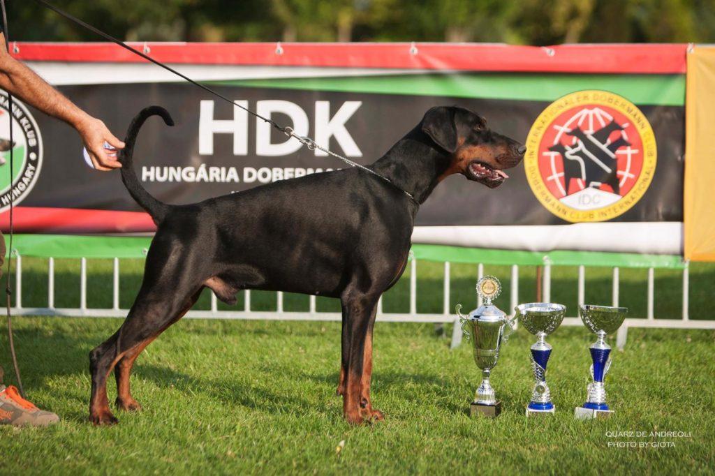 quarz de andreoli vince al campionato ungherese HDK 2019